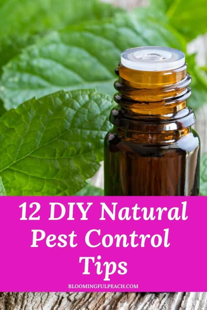 12 DIY Natural Pest Control. These natural pest control tips will keep bugs away from entering your home. These DIY natural pest control tips save you money by using items in your pantry