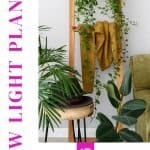 Finding the best lighting for indoor plants can be a struggle at times. When looking for the best houseplants that thrive in a low light setting, you'll want to check out this ultimate resource guide