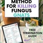 How to kill fungus gnats with soapy water