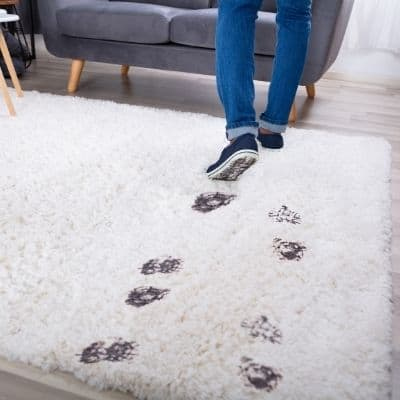 DOES VINEGAR AND BAKING SODA REMOVE OLD STAINS FROM CARPET
