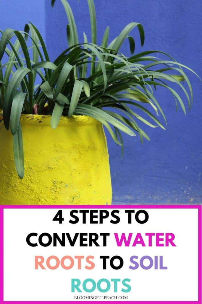 There's nothing more exciting than propagating a plant in water. Using the proper transplanting techniques will give your new plant a bright future, and will ensure it's healthy for many years to come. Learn how to transfer a plant from water to soil without damaging the root system and potentially killing it.