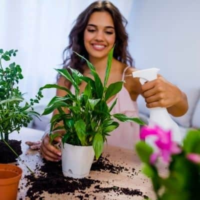 How to do you get rid of fungus gnats in potting soil. This is how you get rid of fungus gnats on houseplants. Fungus gnats can destroy your plants if you don't take care of them before it's too late.