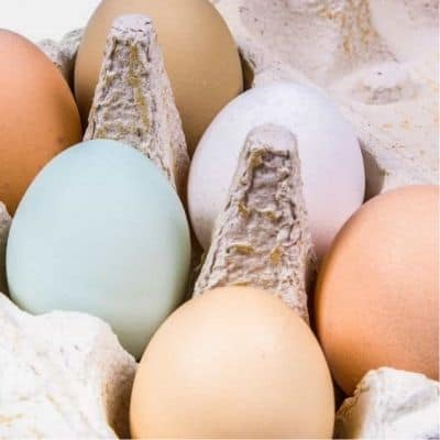 How to determine what the labelson eggs mean courtest of urban farmie
