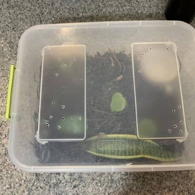 how to make a propagation box and propagate plants from cuttings