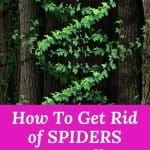 12 DIY Natural Pest Control. These natural pest control tips will keep bugs and spiders away from entering your home. These DIY natural pest control tips save you money by using items in your pantry