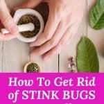 12 DIY Natural Pest Control. These natural pest control tips will keep bugs and stink bugs away from entering your home. These DIY natural pest control tips save you money by using items in your pantry