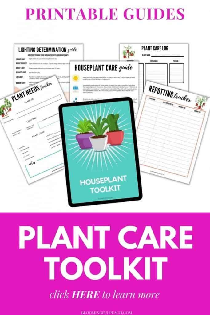 houseplant care printables