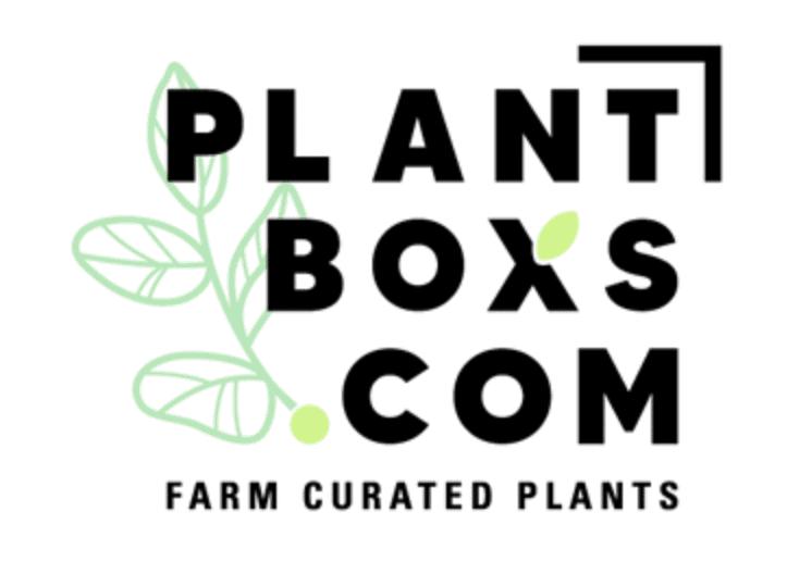 plantbox subscription bloomingfulpeach.com