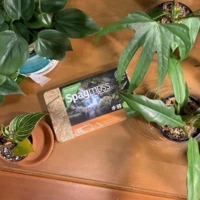 what are some common types of growing medium used for rooting cuttings