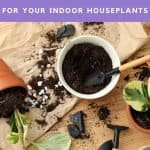 This is how you pick the best potting soil for indoor plants. Deciding what the best potting soil for houseplants shouldn't be decided by what a plant YouTuber says. Finding the best potting soil for houseplants is easy.