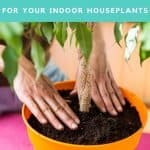 Deciding what the best potting soil for houseplants shouldn't be decided by what a plant YouTuber says. Finding the best potting soil for houseplants is easy. What type of soil is best for indoor plants