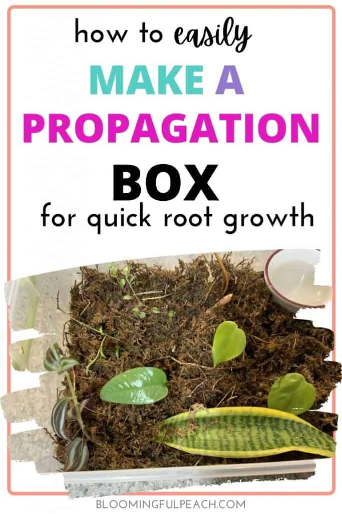 Learn how to make an easy propagation box for your houseplant cuttings. This propagation box will aid in the rapid growth of your houseplant's root system.