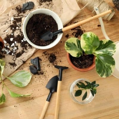 Deciding what the best potting soil for houseplants shouldn't be decided by what a plant YouTuber says. Finding the best potting soil for houseplants is easy. Learn how to pick the best potting soil for your plant's needs.