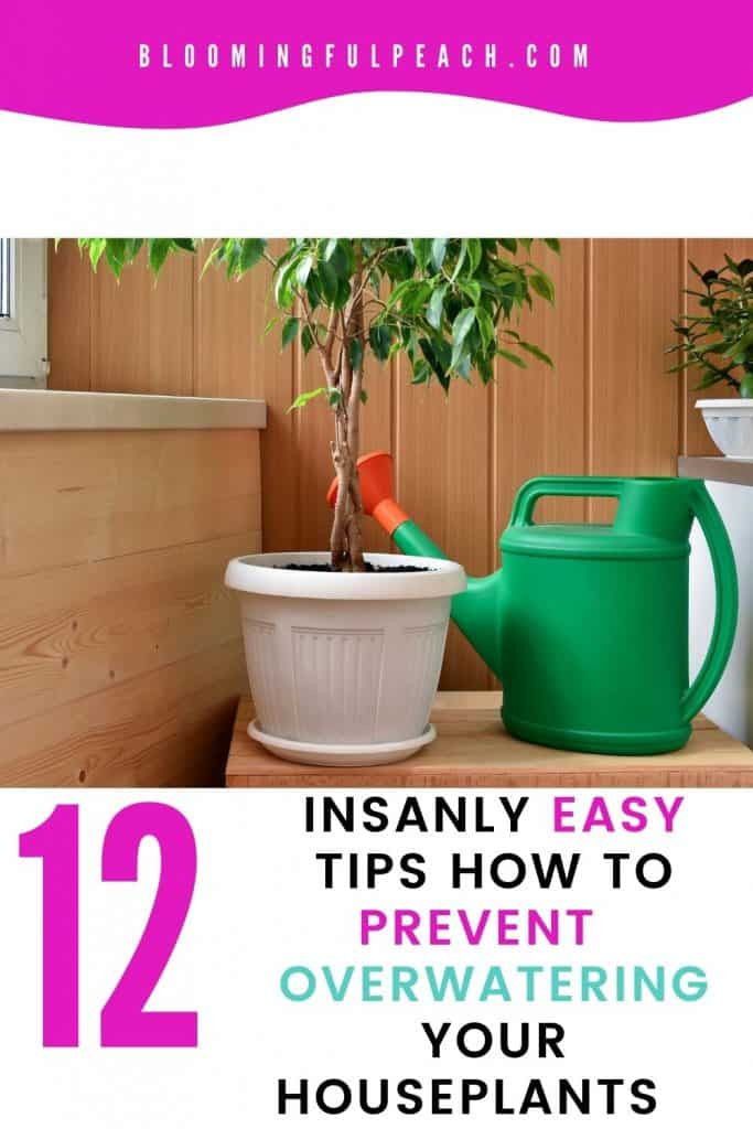Aside from the struggles of proper lighting, as a plant owner watering your houseplants seems to be one of the most popular frustrations. These quick easy houseplant watering tips will make your plants thrive like their out in their natural habitat.