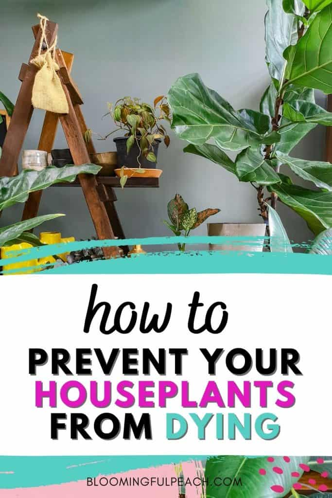 how to water your houseplants. The number one way to kill your houseplants is by over-watering. Learn exactly how to water your houseplants without killing them.