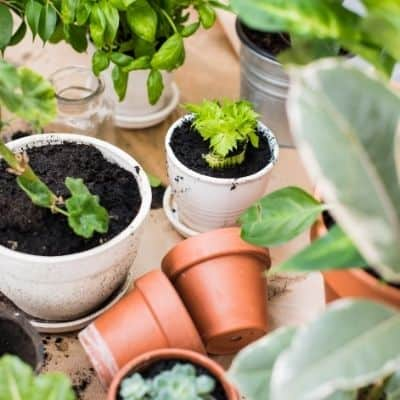 How do you know what potting soil is the best for houseplants? Deciding what the best potting soil for houseplants shouldn't be decided by what a plant YouTuber says. Finding the best potting soil for houseplants is easy.