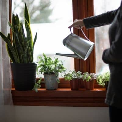 How do i water my houseplants without killing them. how to water your houseplants. The number one way to kill your houseplants is by over-watering. Learn exactly how to water your houseplants without killing them.