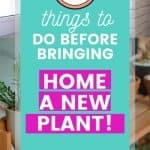 How to choose a healthy plant at the store