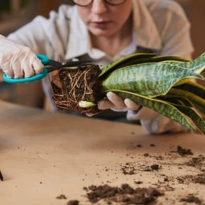 how to propogate houseplants using a plant propagation box