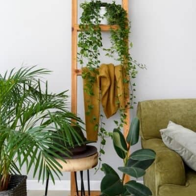 plants for low light areas