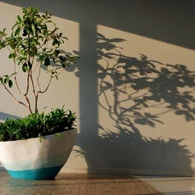 the best lighting for houseplants