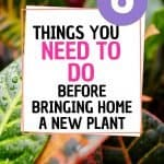 what do i need to do before bringing home a new plant