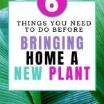 6 things you need to do before bringing home a new plant