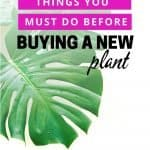 6 things to look for at the store when buying a new plant